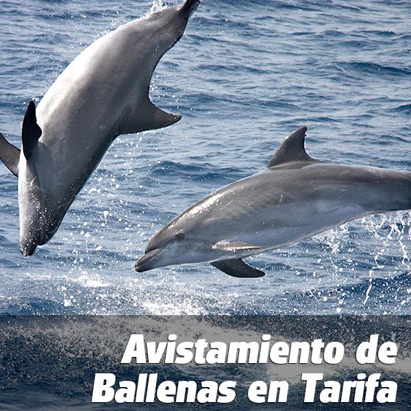 ticket_ballenas_e