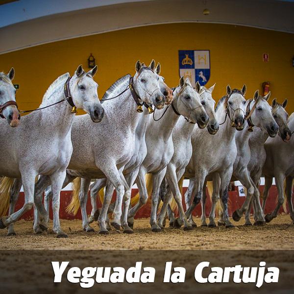 ticket_yeguada